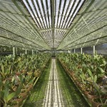 Greenhouses where all our orchids for the wedding came from