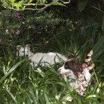 Our dog in the jungle